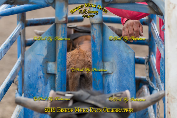 PPP_4393 May 23, 2019 ©Porch Pig Productions