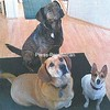 Molly, Dutchess, & Ginger<br /> Owners: Jeannie & Roxanne Trombly<br /> Ellenburg Center, NY