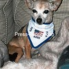 Buddy<br /> Owner: O'Brien<br /> Plattsburgh, NY