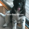 Bobby<br /> <br /> Owners: Jack & Holly Wintermute, Willsboro, NY.