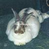 Missy Bunny<br /> <br /> Owners: Sherri & Lloyd Provost, Peru, NY