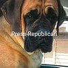 Nella<br /> <br /> Owners: Holly & Jack Wintermute, Willsboro, NY.