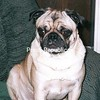 MAXWELL<br /> <br /> Owners: John and Kathe Petro, Plattsburgh, NY