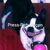 Molly Lyn<br /> <br /> Owner's Name: Sister Nancy, Plattsburgh, NY
