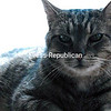 Tomcat<br /> <br /> Owner's Name: Calvin & Karen Coulombe, Rouses Point, NY
