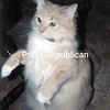 Dusty<br /> <br /> Owner's Name: Beverly Rivers, Morrisonville, NY