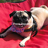 Molly<br /> <br /> Owner's Name: Claudette Raymond & Ray Dixon, Plattsburgh, NY