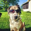 Cool Dog<br /> <br /> Photographer's Name: Whitney LaCroix<br /> Photographer's City and State: Plattsburgh, NY