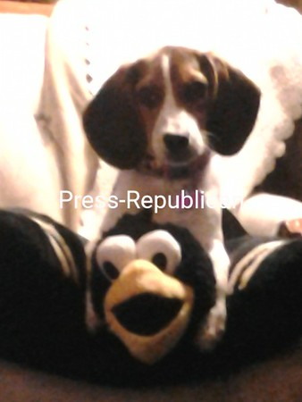 Willow and her friend!<br /> <br /> Photographer's Name: patti racette<br /> Photographer's City and State: plattsburgh, NY