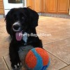 A dog and her ball.<br /> {P-R employee photo: not eligible for contest]<br /> <br /> Photographer's Name: Ryan Buck<br /> Photographer's City and State: Plattsburgh, NY