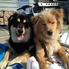 Knox and Finn:  brothers extraordinaire<br /> <br /> Photographer's Name: Karen Bouvier<br /> Photographer's City and State: Rouses Point, NY