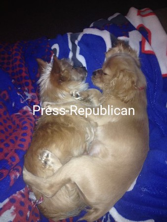 Sleepy Puppies<br /> <br /> Photographer's Name: Tammy Rock<br /> Photographer's City and State: Peru, NY