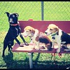 Dog park they love these days! <br /> <br /> Photographer's Name: Amber Galarneau<br /> Photographer's City and State: Plattsburgh, NY