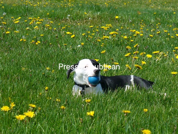 Mina in the dandelions<br /> <br /> Photographer's Name: Leah McDaniel<br /> Photographer's City and State: Plattsburgh, NY