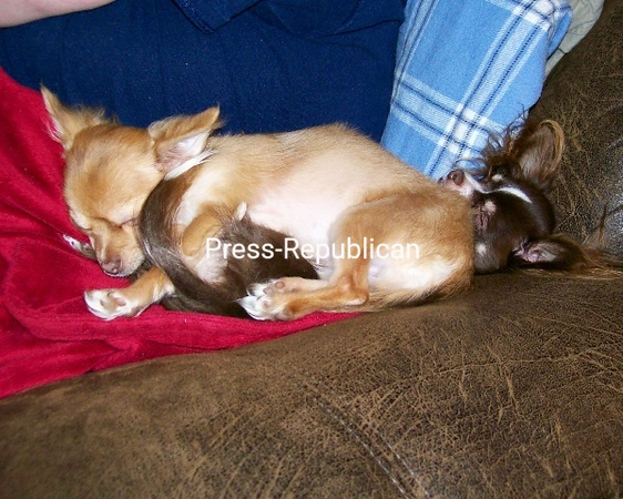Who needs a blanket when you have a baby brother? Dexter 4 months old and Ripley 2yrs old<br /> <br /> Photographer's Name: Stella  Rhodes<br /> Photographer's City and State: plattsburgh, NM