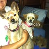 We just groomed the dogs <br /> <br /> Photographer's Name: Susan Rock<br /> Photographer's City and State: West chazy, NY