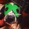 """Nuh-nuh-nuh-nuh- top dog!"" -Gauge<br /> <br /> Photographer's Name: Alyssa  King<br /> Photographer's City and State: Saranac, NY"