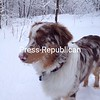 Hudson loves the snow!<br /> <br /> Photographer's Name: Stephanie Conroy<br /> Photographer's City and State: Morrisonville, NY