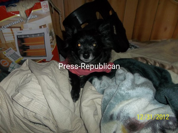 Yona-Our beloved Black pomeranian<br /> <br /> Photographer's Name: Christine LaBarge<br /> Photographer's City and State: Mooers, NY