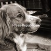 This is my dog Moose. He is a brittany spaniel/golden retriever mix. The sweetest dog you'd ever meet. :)<br /> <br /> Photographer's Name: Caitlin Soulia<br /> Photographer's City and State: Marquette, MI