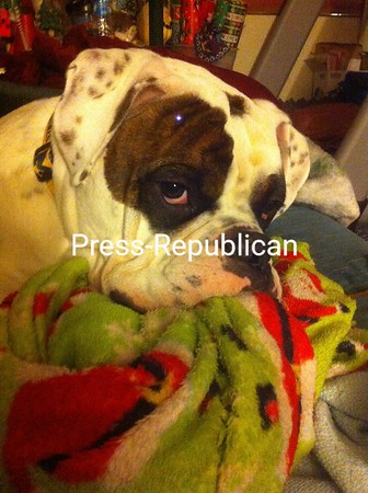 Sammie with his blanket <br /> <br /> Photographer's Name: Elizabeth VanValkenburg<br /> Photographer's City and State: West Chazy, NY