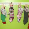 """American Bulldog pups   """"Just Hanging Around""""<br /> <br /> Photographer's Name: Torri Rafferty-Potter<br /> Photographer's City and State: Crown Point, NY"""