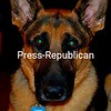Luke! 2 year old German Shepherd<br /> <br /> Photographer's Name: alesha bailey<br /> Photographer's City and State: plattsburgh, NY