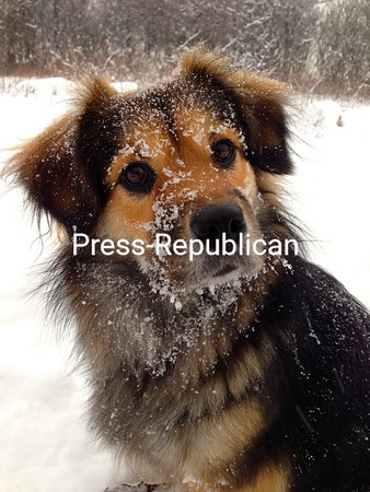Sadie the snow baby!<br /> <br /> Photographer's Name: Alexa Hachigian<br /> Photographer's City and State: Keeseville, NY