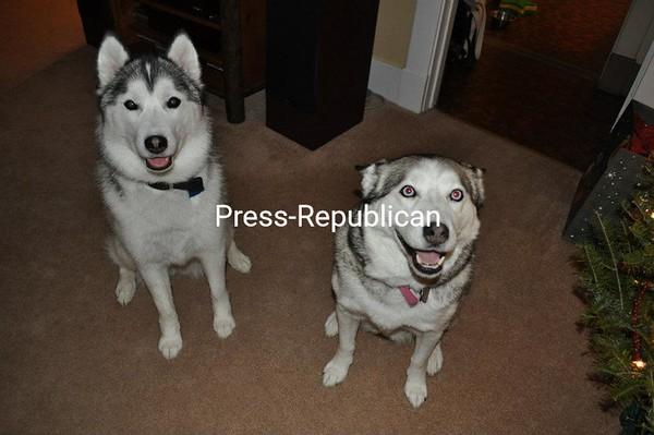 Sasha and Mya<br /> <br /> Photographer's Name: Jody Hart<br /> Photographer's City and State: Au Sable Forks, NY