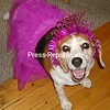 Lexi is a happy Birthday Girl<br /> <br /> Photographer's Name: Collette  Mayer<br /> Photographer's City and State: Plattsburgh, NY