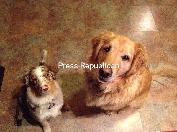 Meet Henry and Hudson Conroy <br /> <br /> Photographer's Name: Stephanie Conroy<br /> Photographer's City and State: Morrisonville, NY