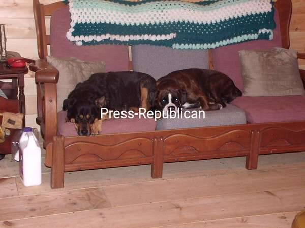 Gina Mae & Albi relaxing at Aunt Shelly's!<br /> <br /> Photographer's Name: Jennifer Ackerman<br /> Photographer's City and State: West Chazy, NY
