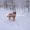 Henry loves the snow too!<br /> <br /> Photographer's Name: Stephanie Conroy<br /> Photographer's City and State: Morrisonville, NY