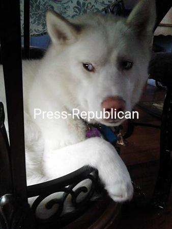 Snowbear Carson <br /> <br /> Photographer's Name: Laureen Carson<br /> Photographer's City and State: Mineville, NY