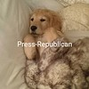 Press-Republican Education Reporter Ashleigh Livingston's golden retriever Puppy Simon<br /> [P-R employee photo: not eligible for contest]<br /> <br /> Photographer's Name: Ashleigh Livingston<br /> Photographer's City and State: Plattsburgh, NY