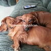 puppy love<br /> <br /> Photographer's Name: joyce baker<br /> Photographer's City and State: Chazy, NY