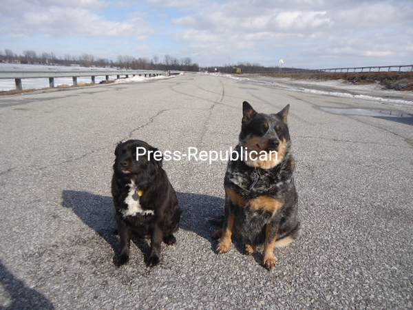 Miss Ella and Miss Tucker<br /> <br /> Photographer's Name: Doug and Linda Pilon<br /> Photographer's City and State: Chazy, NY