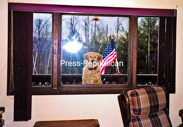 Patriotic Sam peeks in the window. <br /> <br /> Photographer's Name: Arthur Pulsifer<br /> Photographer's City and State: Westport, NY, NY