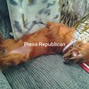 Ryder s  relaxing ..<br /> <br /> Photographer's Name: Craig and Joyce Baker<br /> Photographer's City and State: Chazy, NY