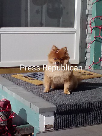 Ellie sunbathing in the sun <br /> <br /> Photographer's Name: Heather DeZalia<br /> Photographer's City and State: Keene Valley, NY