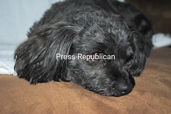 So Sad<br /> {P-R employee photo: not eligible for contest]<br /> <br /> Photographer's Name: Elyse Zielinski<br /> Photographer's City and State: Plattsburgh, NY