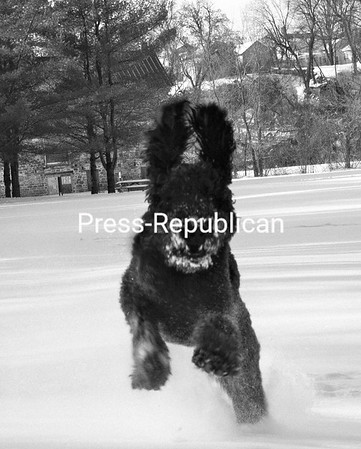Fun in the snow!<br /> <br /> Photographer's Name: Christina  Work<br /> Photographer's City and State: Peru, NY