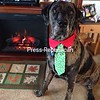 Ready for santa's arrivel!<br /> <br /> Photographer's Name: Debbie Ero<br /> Photographer's City and State: Plattsburgh, NY