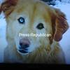 Handsome Hobie dog<br /> <br /> Photographer's Name: Janine Holdridge<br /> Photographer's City and State: Plattsburgh, NY
