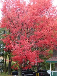 Tree in Tupper Lake