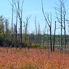 Fall colors in Wickham Marsh