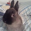 My Netherland Dwarf rabbit, 'Zilla loves to have her picture taken. She always poses for the camera.