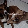 Buddy and Duke<br /> <br /> Photographer's Name: Barry Burdo<br /> Photographer's City and State: Plattsburgh, NY