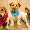 Noah, Sweet Pea & Belle posing with their new Spring bandanas