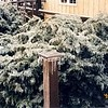 On January 7, 1998, the bushes and fence post in front of our Malone, NY home looked like this!